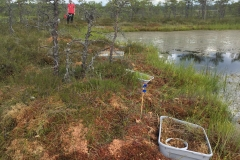 Estonia field site completed!